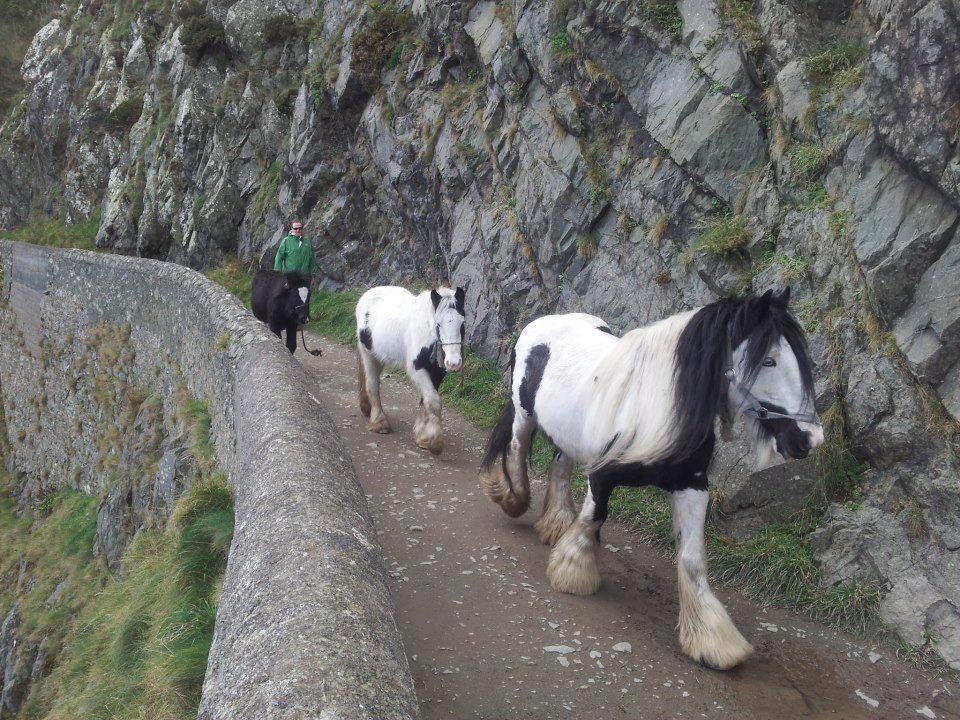 cliffwalk16